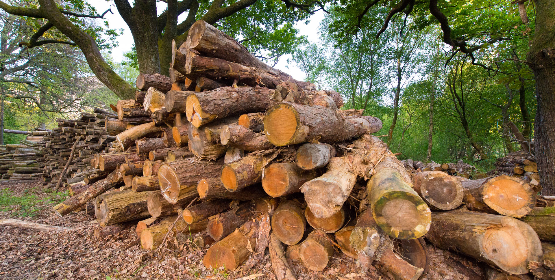Cadwaladr Woodland Products